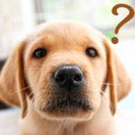 AGA治療で生えた後は薬を中止したり減らしたりできるの?